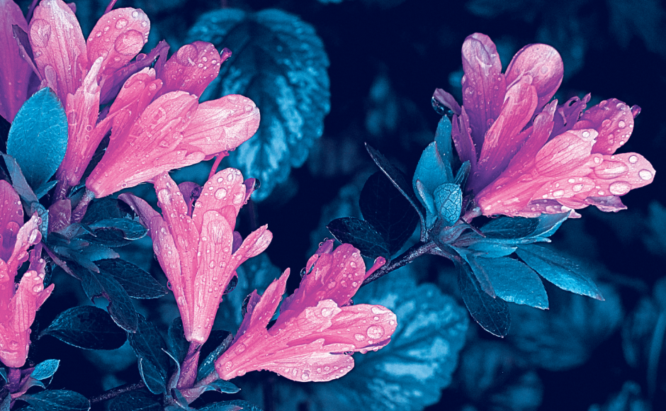 port_Illustration_droplets-flowers
