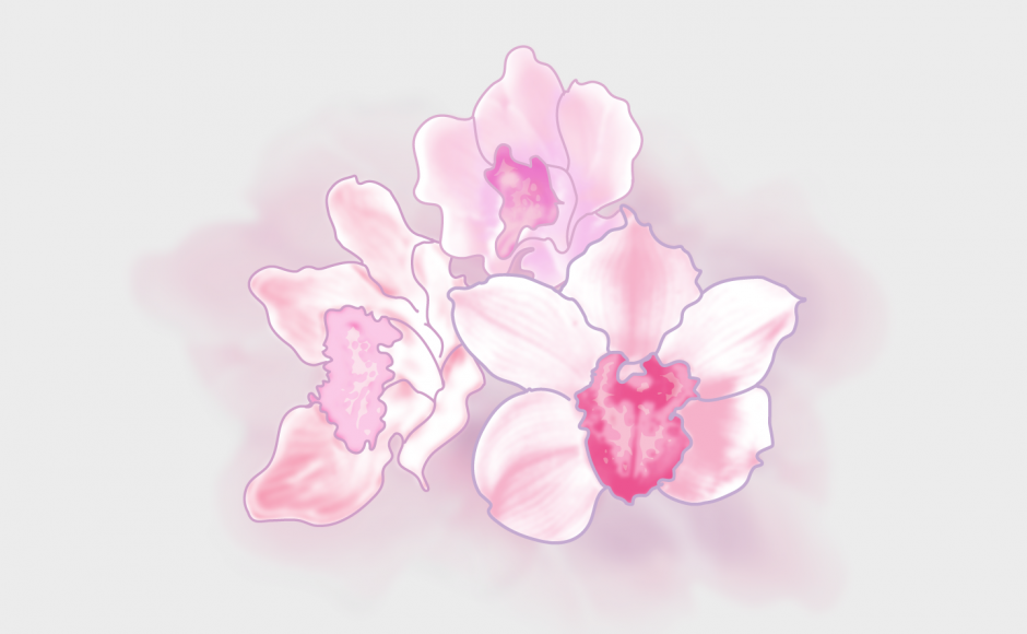 port_Illustration_orchids-pink